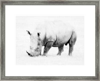 Vanishing Species Framed Print