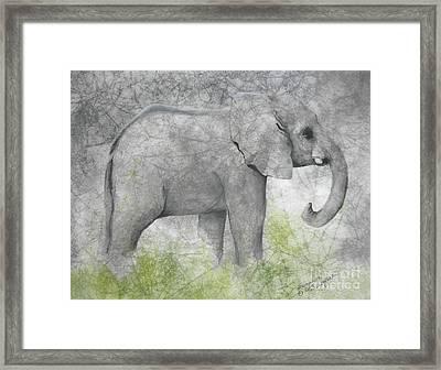 Vanishing Thunder Series-baby Elephant II  Framed Print by Suzanne Schaefer