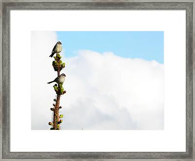 Vantage Point Framed Print by Pamela Patch