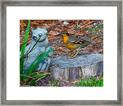 Vared Thursh Framed Print