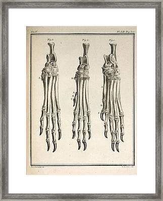Variation Of Dog Feet, 1755 Framed Print