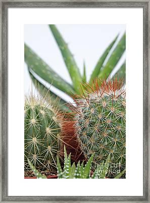 Varied Mini Cactus In Pots Framed Print