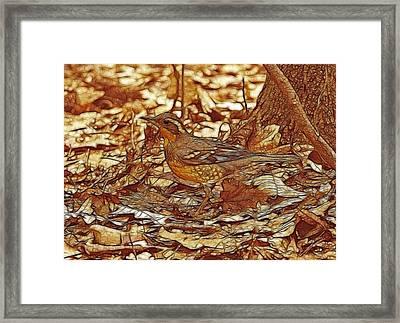 Varied Thrush Framed Print by Sandy Keeton