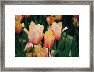 Varigated Colors Pla 49 Framed Print