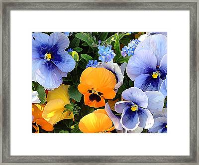 Framed Print featuring the photograph Various Violets by Gabriella Weninger - David