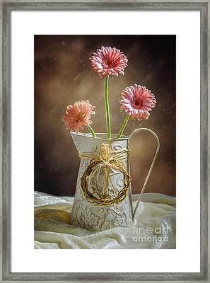 Vase Of Gerbera Flowers Framed Print by Amanda Elwell
