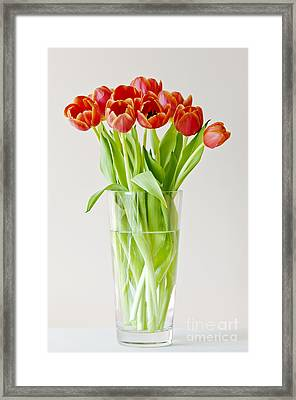 Vase Of Tulips Framed Print
