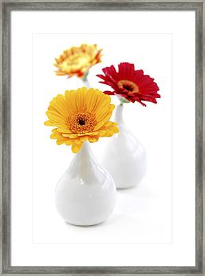 Vases With Gerbera Flowers Framed Print by Elena Elisseeva