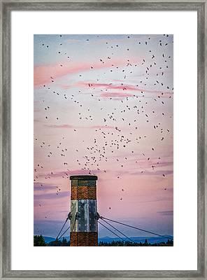 Vaux's Swifts At Chapman Framed Print by Djambel Unkov