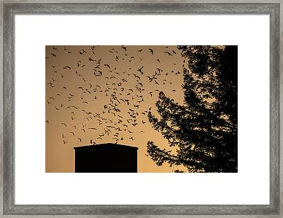 Vaux's Swifts In Migration Framed Print by Garry Gay