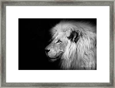 Vegas Lion - Black And White Framed Print by Ian Monk