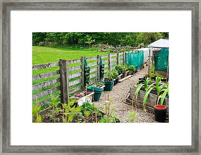 Vegetable Garden Framed Print by Tom Gowanlock