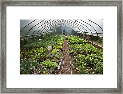 Vegetables In A Polytunnel Framed Print by Jim West