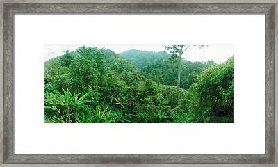 Vegetation In A Forest, Chiang Mai Framed Print