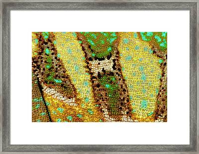 Veiled Chameleon Skin Framed Print by Nigel Downer