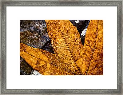 Framed Print featuring the photograph Veins by Anthony Citro