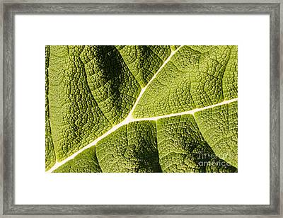 Veins Of A Leaf Framed Print by John Wadleigh