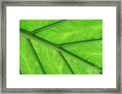Framed Print featuring the photograph Veins Of Life by Judy Whitton