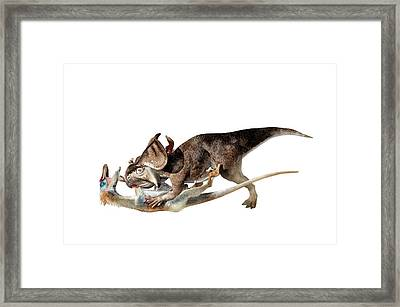 Velociraptor Attacking Protoceratops Framed Print