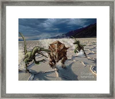 Velociraptor Chase A Bagaceratops Framed Print