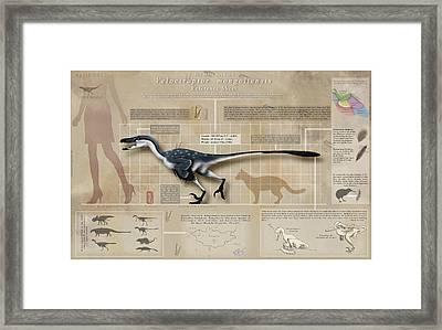 Velociraptor Infographic Framed Print by Christian Masnaghetti