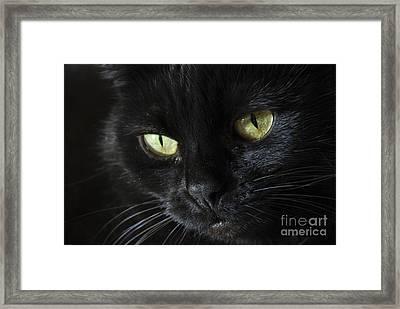 Velvet Framed Print by Anne Gilbert