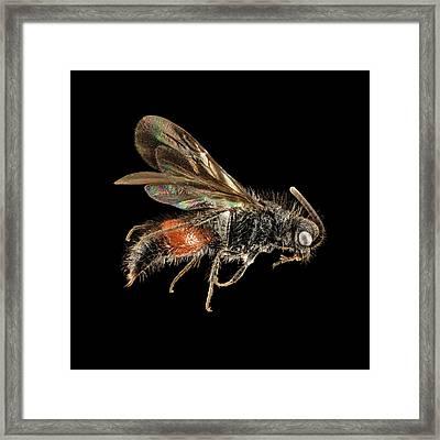 Velvet Ant Framed Print by Us Geological Survey