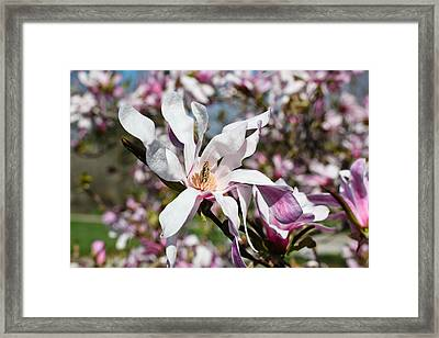 Velvet Framed Print by Julie Andel