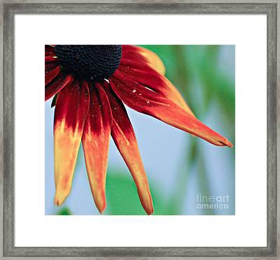 Velvet Petals Framed Print