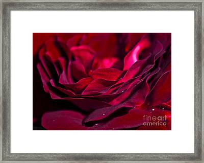 Velvet Red Rose Framed Print by Jan Bickerton