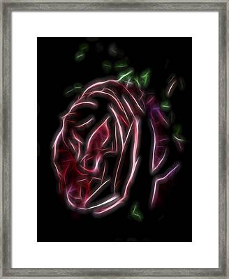 Velvet Rose 1 Framed Print by William Horden