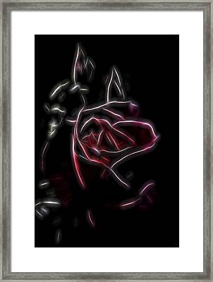 Velvet Rose 2 Framed Print by William Horden