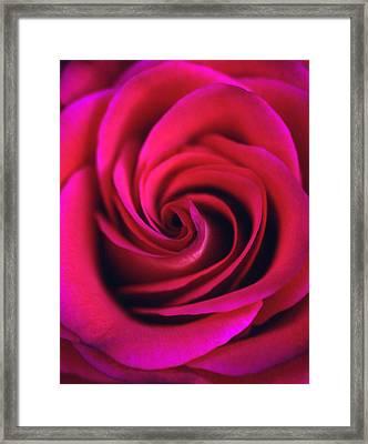 Velvet Rose Framed Print by Kathy Yates