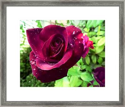Velvet Shimmer Framed Print by Shawna Rowe
