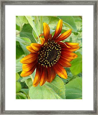 Velvet Sun Framed Print by Elizabeth Sullivan