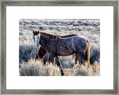 Velvet - Young Colt In Sand Wash Basin Framed Print