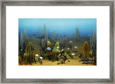 Vendian Marine Life Framed Print by Chase Studio