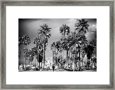 Venice Beach Palms Framed Print by John Rizzuto