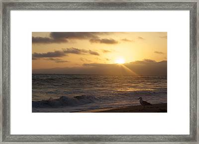 Venice Beach Sunset Framed Print by Rollie Robles