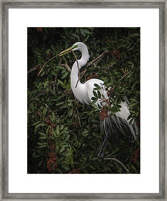 Venice Rookery Egret Framed Print
