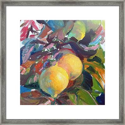 Ventura Lemons Framed Print