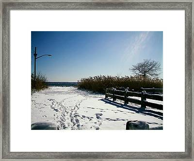 Venturing Out Framed Print
