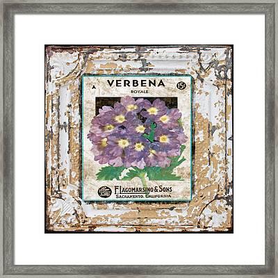Verbena On Vintage Tin Framed Print by Jean Plout