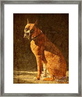Vermeer's Dog Framed Print by Judy Wood