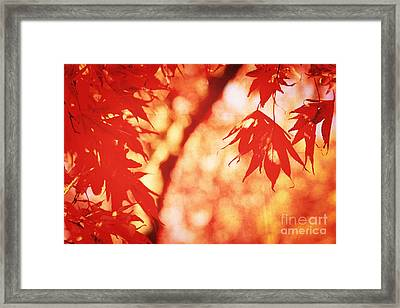 Vermillion Maple Leaves With Vintage Touch Framed Print by Beverly Claire Kaiya