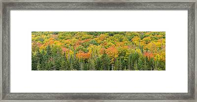 Vermont Autumn Fall Panorama Forest Foliage Framed Print by Andy Gimino