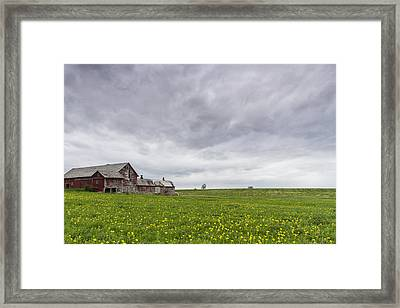 Vermont Barn Grass Dandelion Field Storm Clouds Framed Print by Andy Gimino