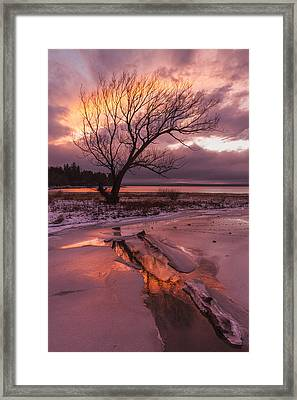 Winter- Charlotte Vt- Sunset-tree-silhouette  Framed Print by Andy Gimino