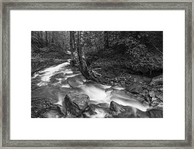 Vermont Forest Foliage Black And White Waterfall Framed Print by Andy Gimino