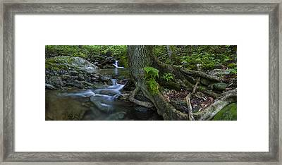 Vermont Landscape Brook Stream Forest Waterfall Framed Print by Andy Gimino
